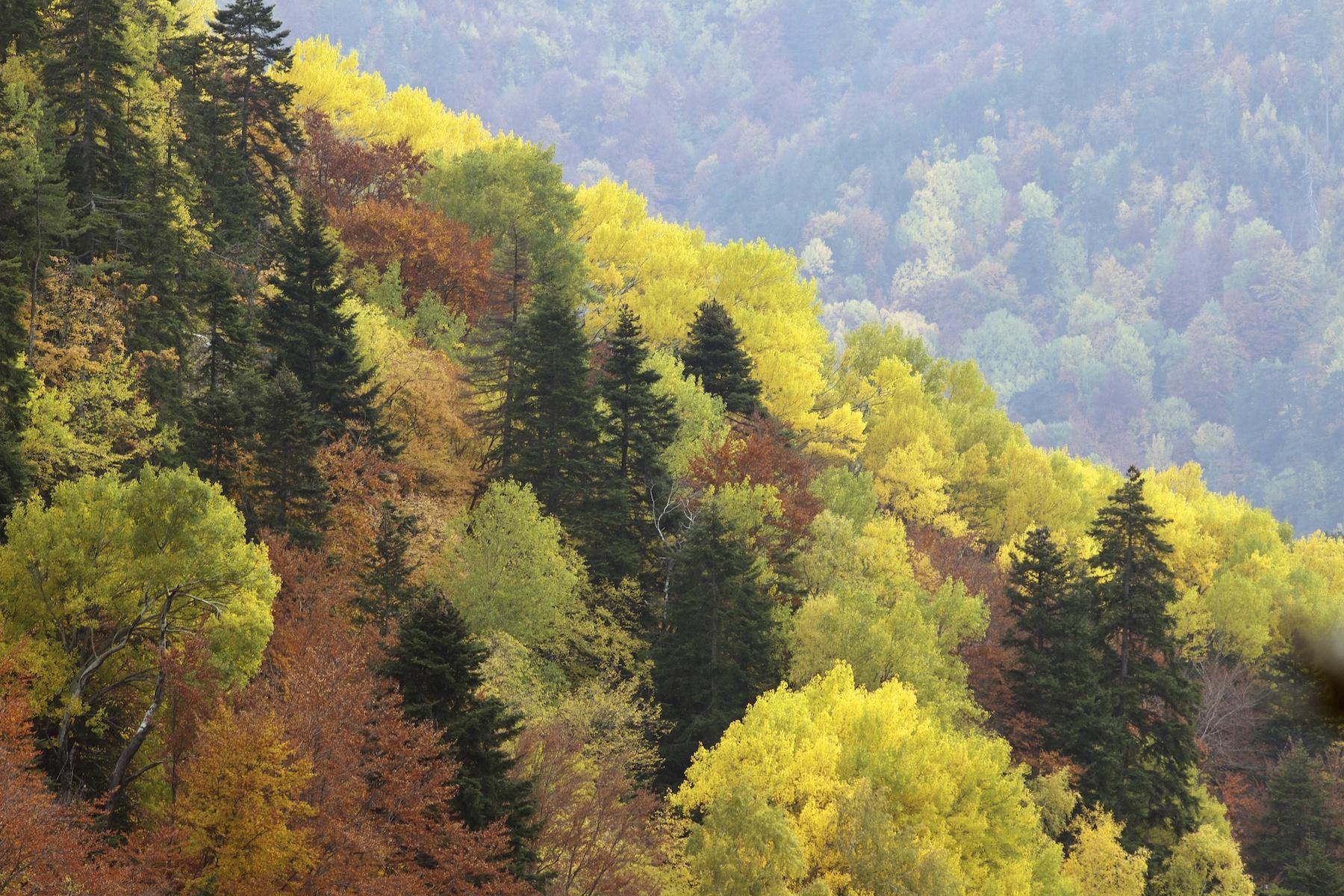 Ολες οι αλλαγές για τα δάση   tovima.gr