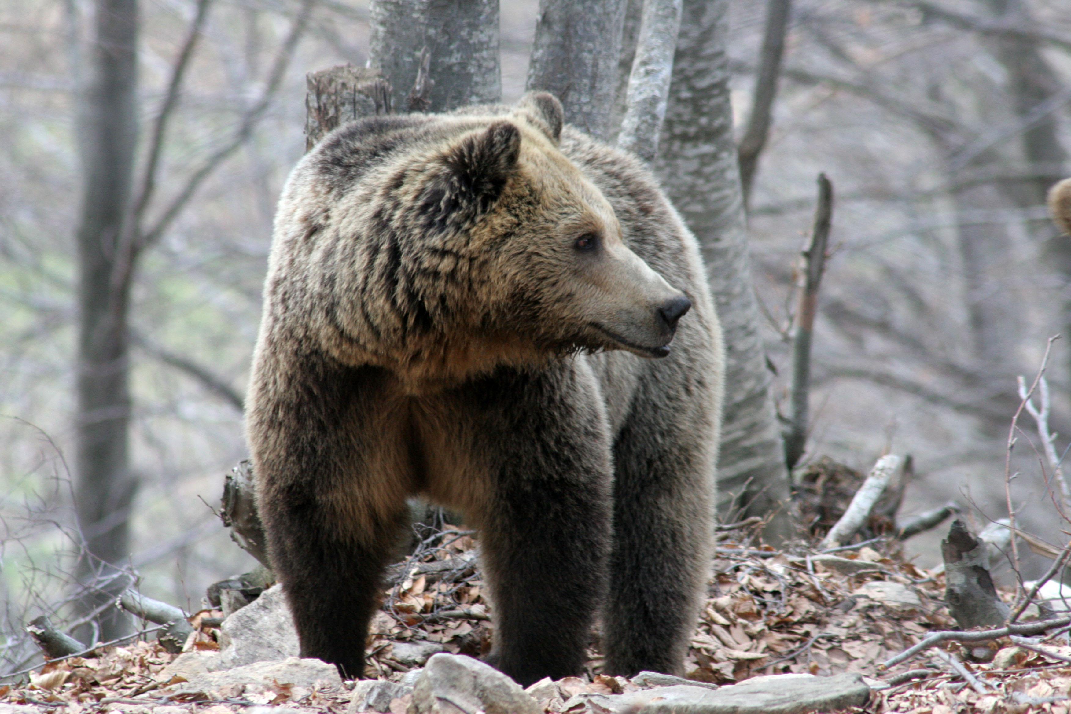 Φλώρινα: Αρκούδα νεκρή στο Βροντερό Φλώρινας | tovima.gr