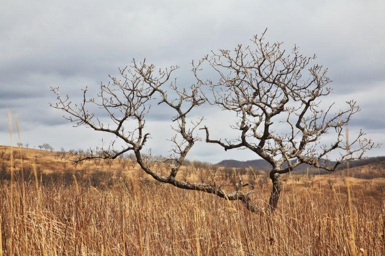 Η χειρότερη ξηρασία των τελευταίων 30 ετών πλήττει τη Β. Κορέα   tovima.gr