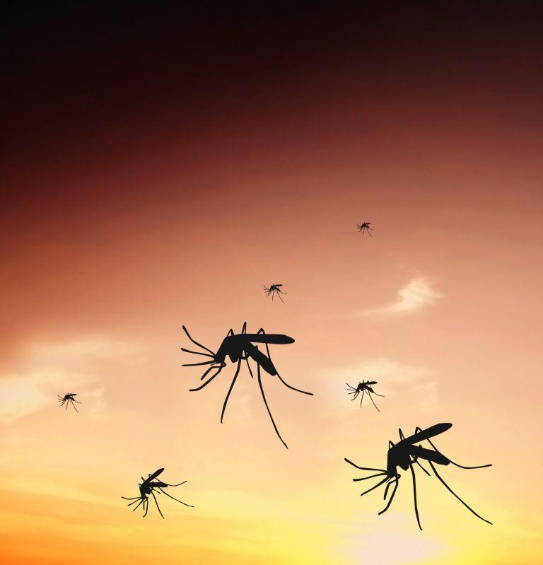 Δελτίο καιρού για… κουνούπια | tovima.gr
