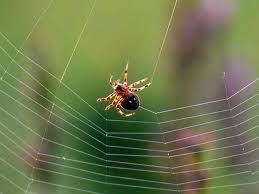 «Υφαίνοντας» αιμοφόρα αγγεία όπως η… αράχνη | tovima.gr