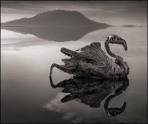 Η λίμνη που μετατρέπει τα θύματά της σε στήλες άλατος | tovima.gr