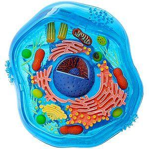 Το Νομπέλ Ιατρικής στην ενδοκυτταρική κυκλοφορία | tovima.gr