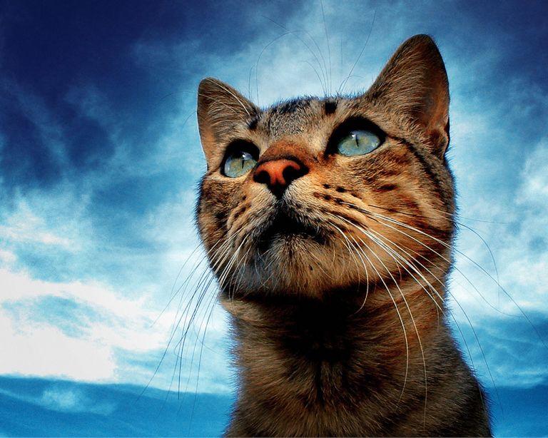Γέμισε με γάτες η Κύπρος   tovima.gr