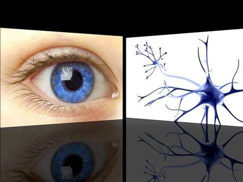 Εκτύπωσαν οφθαλμικά κύτταρα!   tovima.gr
