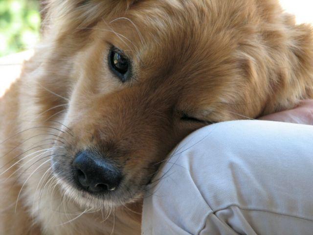 «Εγκεφαλική» σχέση έχει ο σκύλος με το αφεντικό του | tovima.gr