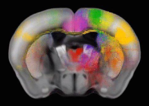 Ο πληρέστερος χάρτης εγκεφαλικών συνάψεων θηλαστικού   tovima.gr