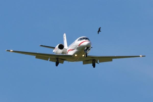 Χανιά: Αναγκαστική προσγείωση αεροσκάφους λόγω πουλιών στον κινητήρα | tovima.gr