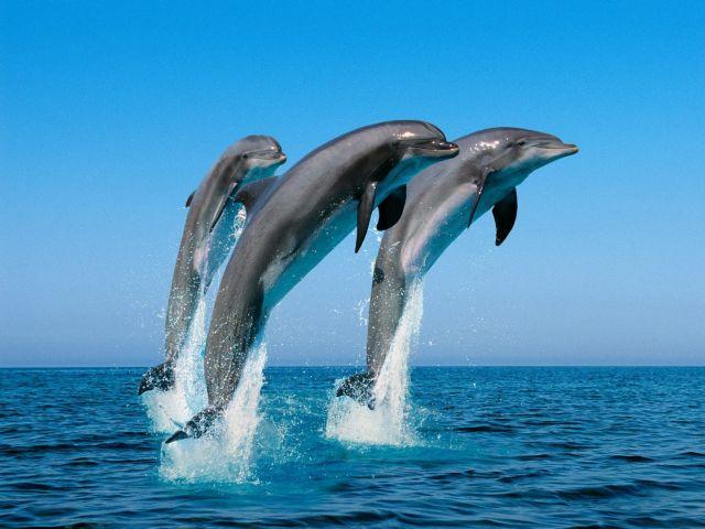 Βρέθηκε ο πατριάρχης των δελφινιών   tovima.gr