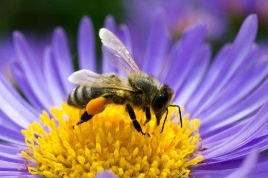 Ξανά στο εδώλιο φυτοφάρμακα για τον αφανισμό των μελισσών   tovima.gr