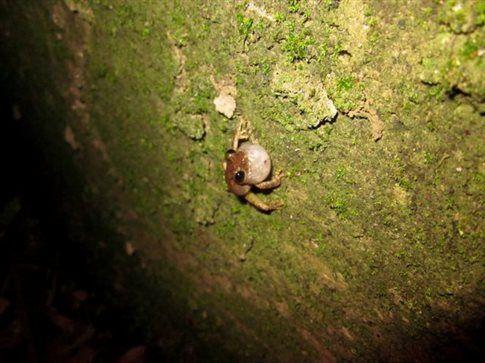 Ο βάτραχος που έπεσε στο λούκι του έρωτα | tovima.gr