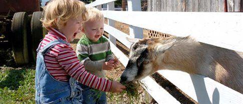 Λιγότερες αλλεργίες για παιδιά που έχουν επαφή με ζώα | tovima.gr