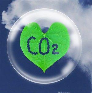 Τα φυτά απορροφούν περισσότερο CO2 | tovima.gr
