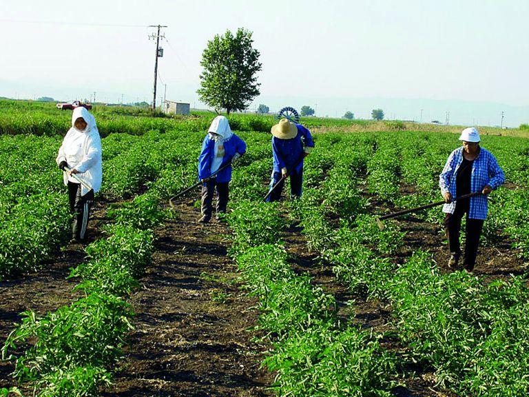 Συνδαιτυμόνας: καλλιεργημένος  καλλιεργητής | tovima.gr