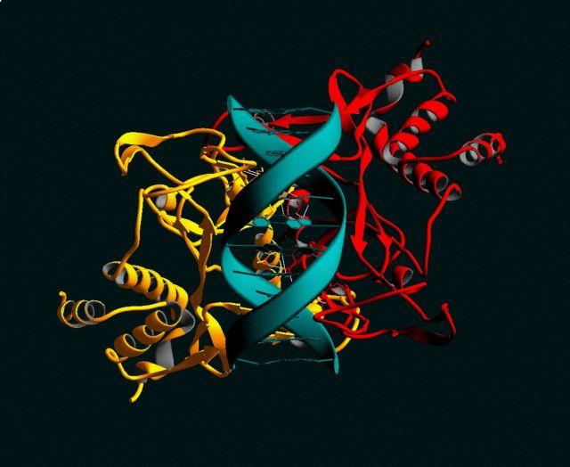 Τα πρώτα τεχνητά ένζυμα | tovima.gr