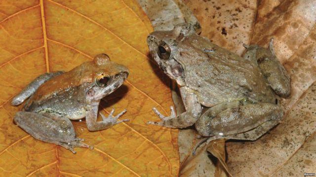 Ο βάτραχος που γεννά γυρίνους | tovima.gr