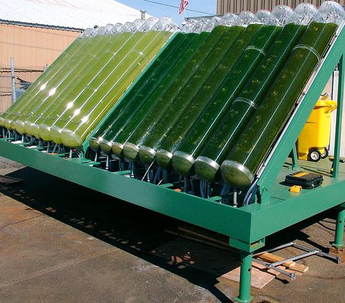 Εκτός πλατφορμας του WinnersFund το σχέδιο της Algae Farms | tovima.gr