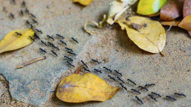 Μυρμήγκια κατά του… μποτιλιαρίσματος | tovima.gr