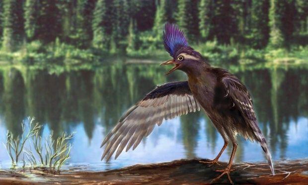 Ο αρχαιότερος συγγενής των πτηνών   tovima.gr