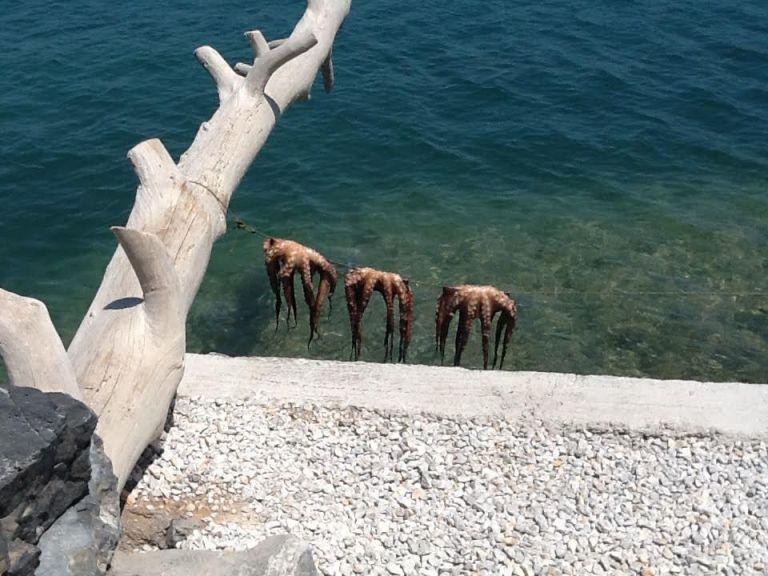 Γεύμα στο Ferryman της Ελούντας | tovima.gr