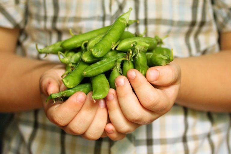 Λαχανικά με τα παιδιά, για τα παιδιά   tovima.gr