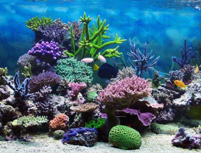 Νέα επιδημία ξεβάφει τα κοράλλια | tovima.gr
