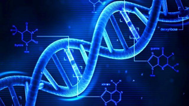 «Διαγράφουν» το DNA της γήρανσης | tovima.gr