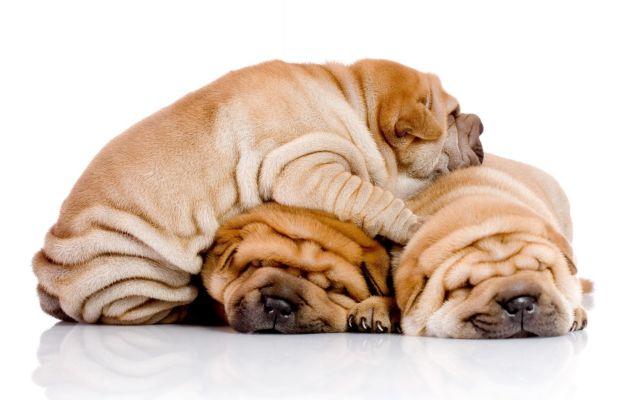 Ασιάτες είναι οι σκύλοι | tovima.gr