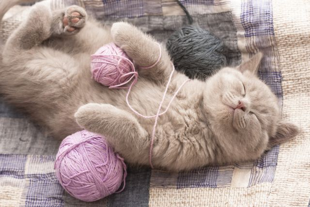 Μουσική για… γάτες | tovima.gr