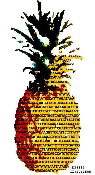 Αποκαλύφθηκε το DNA του ανανά | tovima.gr