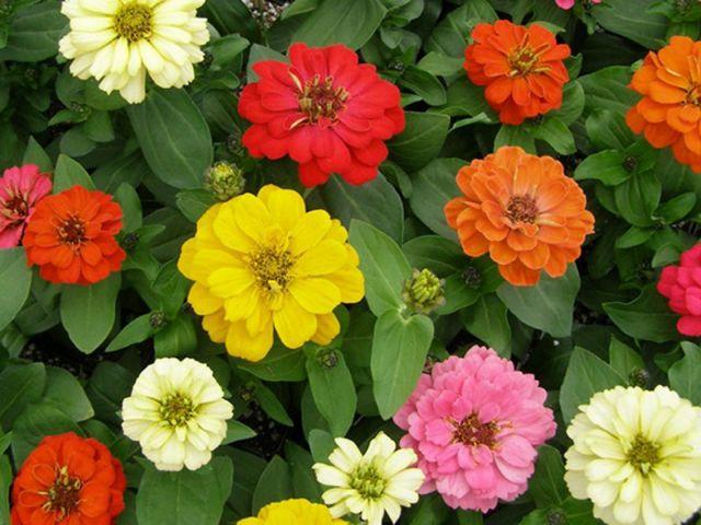 Ενα μπουκέτο… διαστημικά λουλούδια παρακαλώ | tovima.gr