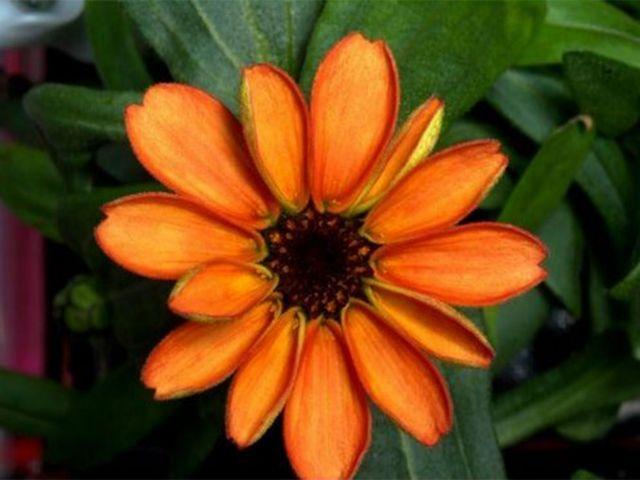Ανθισε το πρώτο διαστημικό λουλούδι | tovima.gr