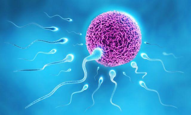 Αποκαλύφθηκε κρίσιμος μηχανισμός της γονιμοποίησης | tovima.gr