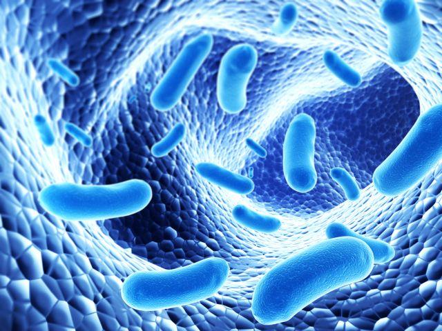 Πρόγραμμα χαρτογράφησης του μικροβιώματος | tovima.gr
