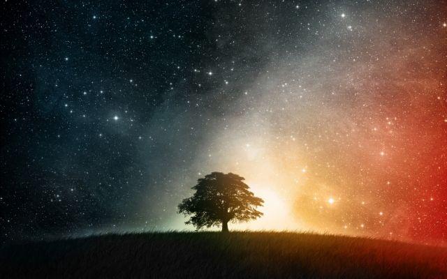 Τα δέντρα κοιμούνται το βράδυ | tovima.gr
