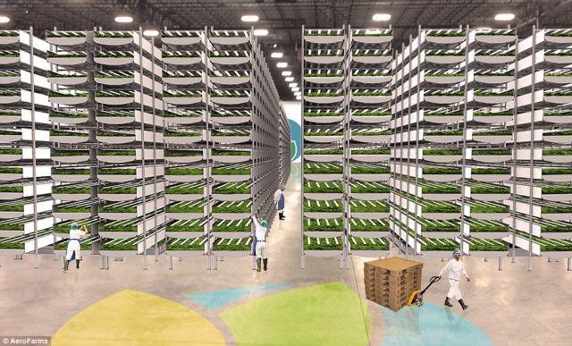 Η μεγαλύτερη «κάθετη φάρμα» του κόσμου στη Νέα Υόρκη | tovima.gr