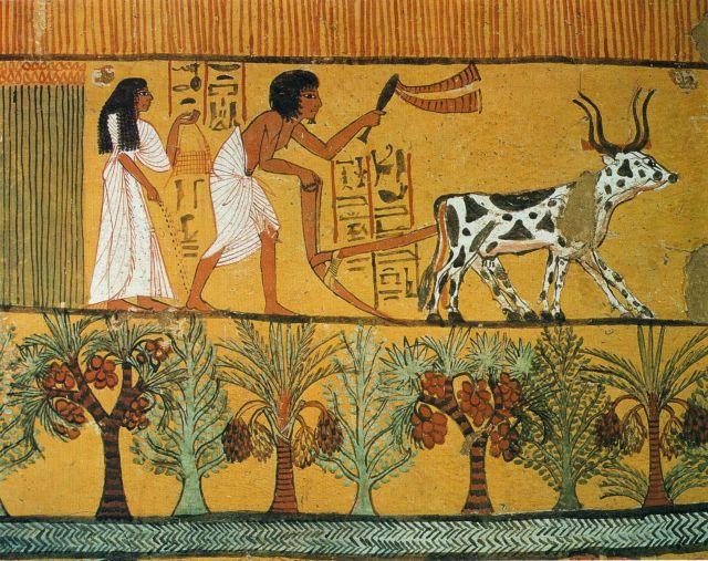 Η γεωργία «εφευρέθηκε» στη Μέση Ανατολή πάνω από μία φορά | tovima.gr