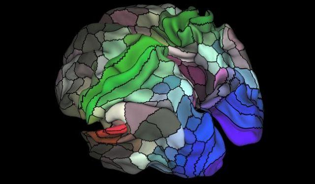 Χαρτογράφησαν τον εγκεφαλικό φλοιό | tovima.gr