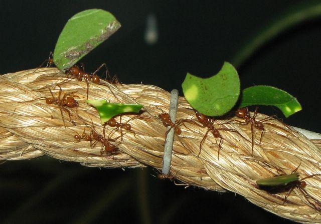 Στο φως τα μυστικά των πρώτων γεωργών που ήταν… μυρμήγκια | tovima.gr