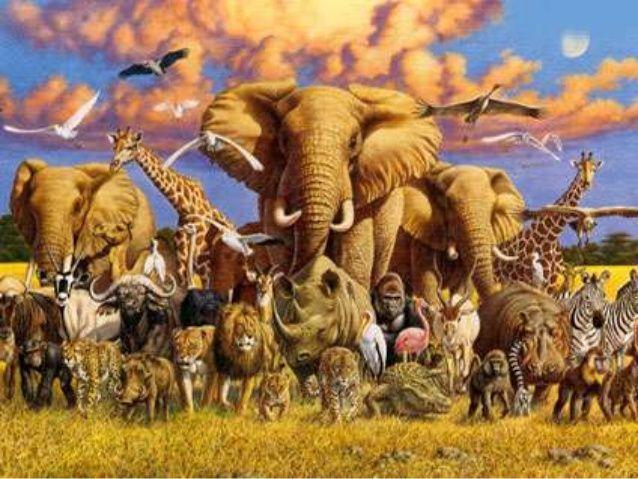 Μειώθηκε 58% σε 40 χρόνια ο πληθυσμός των άγριων ζώων! | tovima.gr