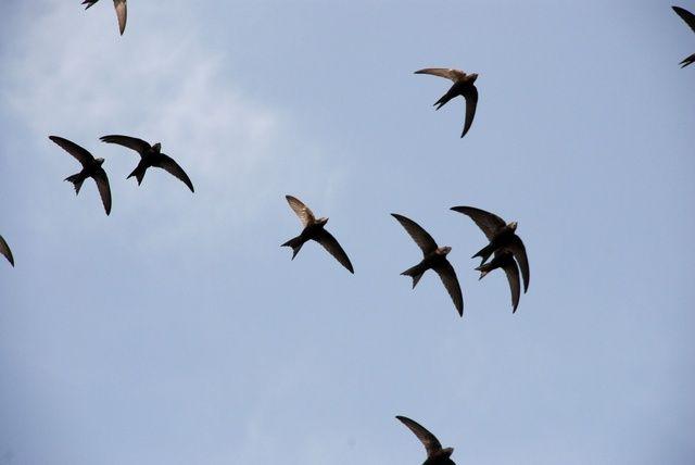 πρώτη φορά με ένα μεγάλο μαύρο πουλί Ebony μεγάλα βυζιά λεσβίες