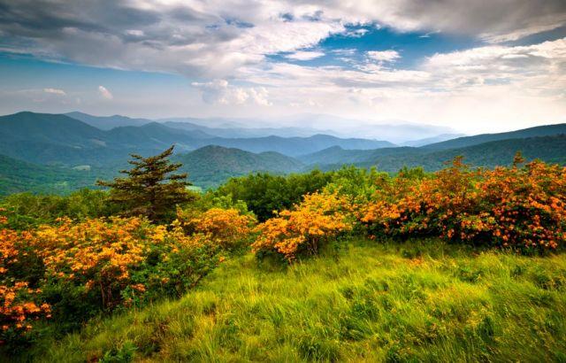 Φυτά αχόρταγα για διοξείδιο του άνθρακα σύμμαχοι της Γης   tovima.gr