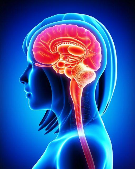 Πρωτεΐνη αυξάνει τον κίνδυνο εγκεφαλικού στις γυναίκες | tovima.gr