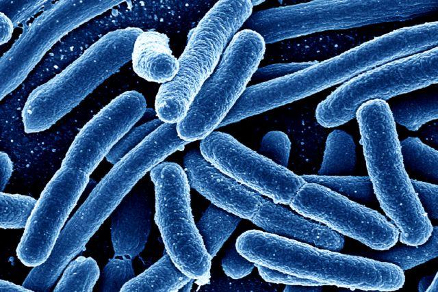 Έλληνας βιολόγος «διάβασε» 1.000 νέα γονιδιώματα μικροβίων | tovima.gr