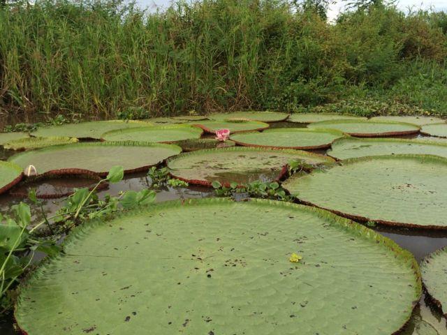 Τα φράγματα απειλούν τον Αμαζόνιο | tovima.gr