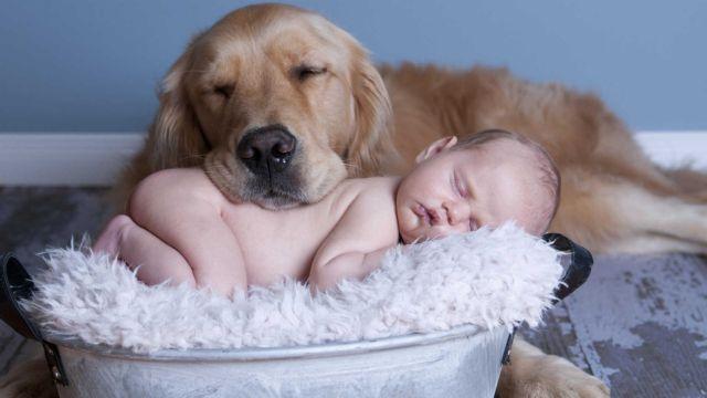 Η ωκυτοκίνη «κλειδί» για τον…  συνεργάσιμο σκύλο | tovima.gr
