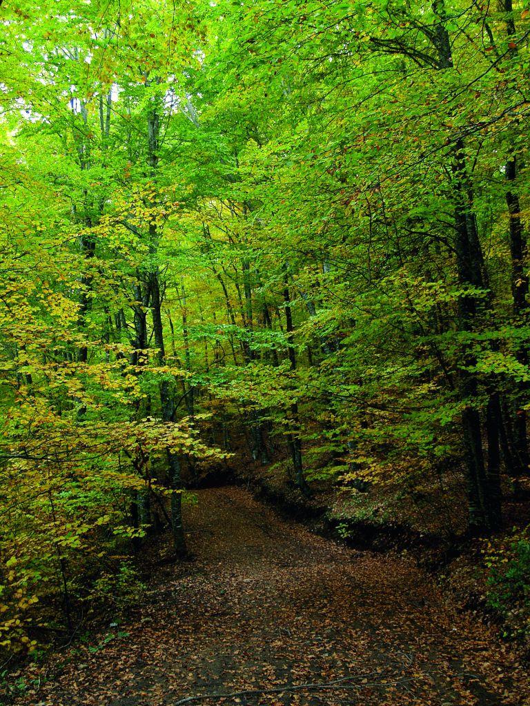 Λυρισμός του φθινοπώρου | tovima.gr