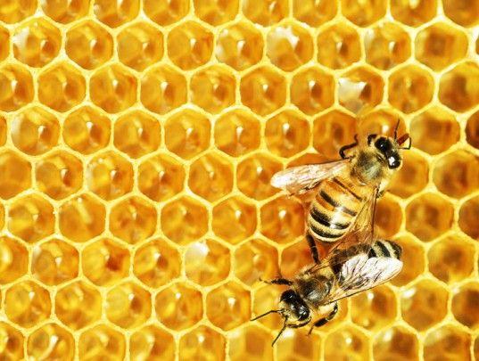 Τρία στα τέσσερα μέλια περιέχουν νεονικοτινοειδή | tovima.gr
