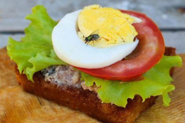 Μην τρώτε φαγητό που έχουν ακουμπήσει μύγες   tovima.gr