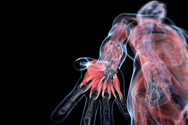 Δημιουργήθηκε ο πρώτος λειτουργικός ανθρώπινος μυς από κύτταρα δέρματος | tovima.gr